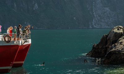 Wildlife that can be seen on a Milford Sound cruise