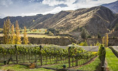 The top 8 places to enjoy some Central Otago wine